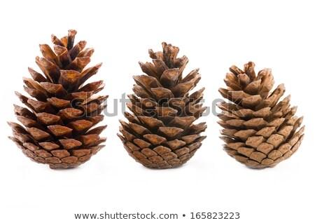 Stock photo: Three pinecones on white background