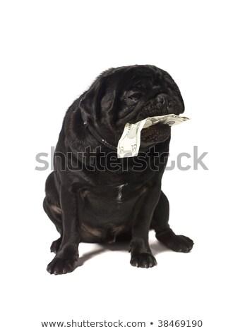preto · boca · isolado · branco · cão - foto stock © gemenacom