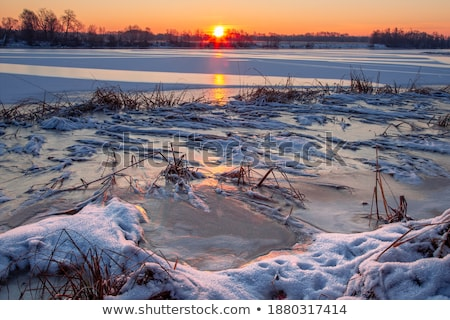 Winter landscape forest snow river water Stock photo © fotoaloja