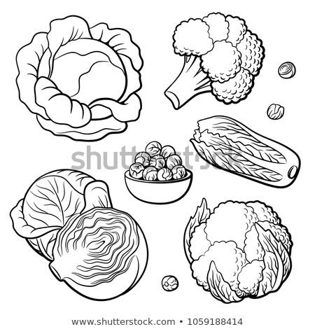 Chou blanche réaliste isolé illustration cuisine Photo stock © ConceptCafe