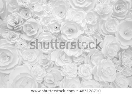 白い花 白 実例 花 自然 背景 ストックフォト © colematt