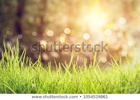 Primavera sol hierba luces suelo pradera Foto stock © romvo