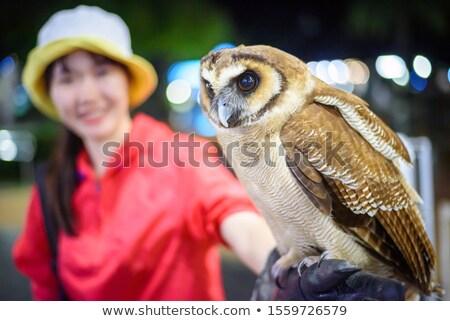 Feliz jardim zoológico noite ilustração árvore fundo Foto stock © colematt