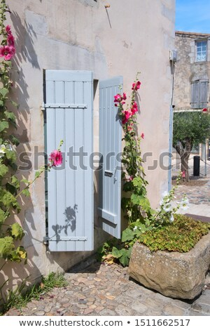 Pink Hollyhocks with blue blinds Stock photo © ivonnewierink