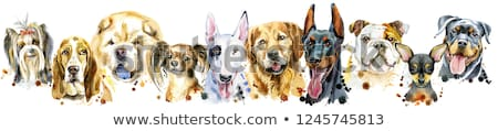 Border from watercolor portraits of dogs for decoration Stock photo © Natalia_1947