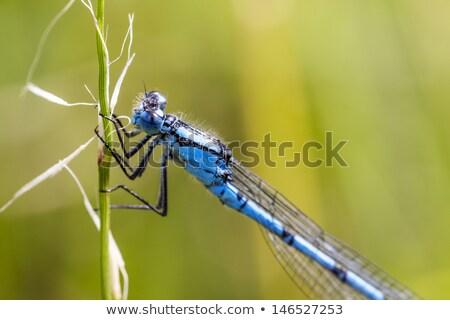 kék · pihen · fű · természet · egyedül · makró - stock fotó © chris2766