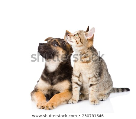 two mixed breed funny dog in a white studio stock photo © vauvau