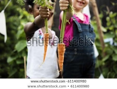 legumes · jardim · fresco · orgânico · comida · alimentação · saudável - foto stock © is2