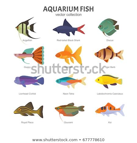Guppy Neon Tetra Fish Set Vector Illustration Stock photo © robuart