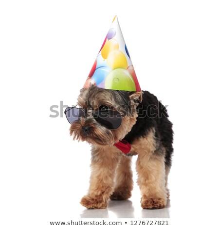Nieuwsgierig verjaardag yorkshire terriër zonnebril Stockfoto © feedough
