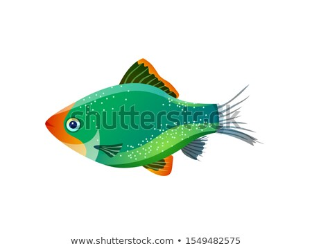 green tiger barb ocean inhabitant colorful poster stock photo © robuart