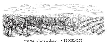 Tájkép szőlőskert francia vidék völgy bor Stock fotó © karandaev