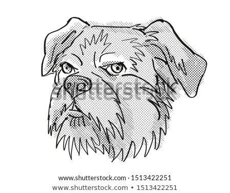 Brussels Griffon Dog Breed Cartoon Retro Drawing Stock photo © patrimonio