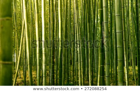 осень пейзаж бамбук фестиваля аннотация природы Сток-фото © kostins