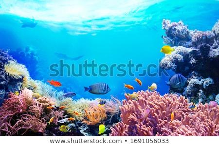 Akvaryum güzel bitkiler balık spor Stok fotoğraf © jonnysek