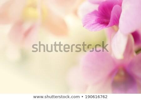Sweet spa beauty Stock photo © pressmaster
