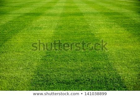 Résumé détaillée football silhouette volée blanche Photo stock © rioillustrator