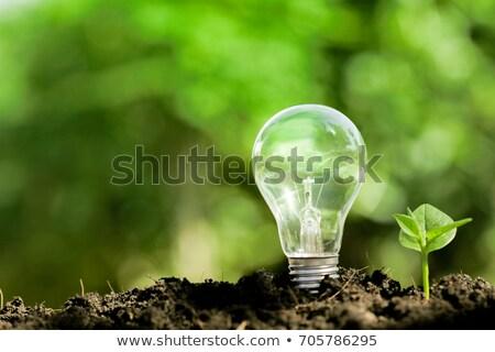 lampadina · blu · luce · albero · ambiente - foto d'archivio © cherezoff