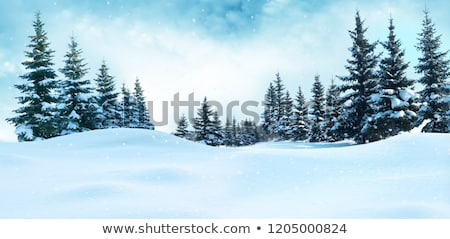 christmas landscape with fir tree in the snow stock photo © kotenko