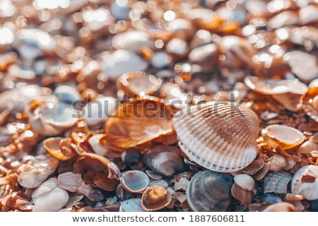 Many of Colorful seashell as background, selective focus Stock photo © smuki
