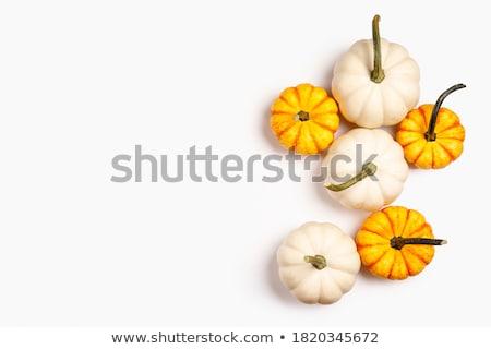 Gourd background with stem Stock photo © njnightsky