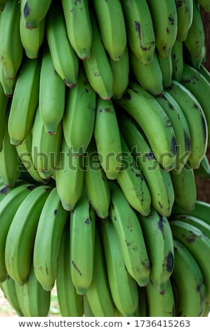 Close up of bunches of green bananas Stock photo © IS2