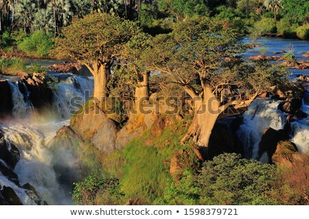 rapid cateract waterfall Stock photo © unkreatives