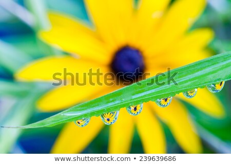 Flower refraction in dew drops on a blade of grass Stock photo © manfredxy