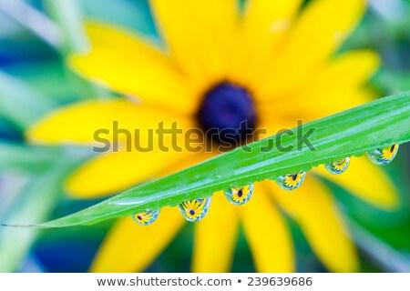 çiçek · çiy · damla · bıçak · çim · makro - stok fotoğraf © manfredxy
