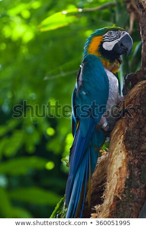 Blue Macaw in the in the Jardin Botanique de Deshaies Stock photo © CaptureLight