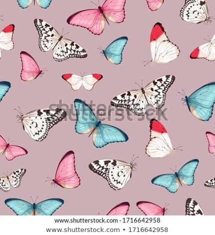 pillangó · makró · zöld · természet · kert · tavasz - stock fotó © meinzahn