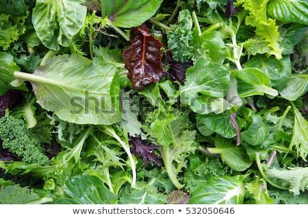 Yeşil soyut yeşil yaprakları doğa bitkiler dekorasyon Stok fotoğraf © noche
