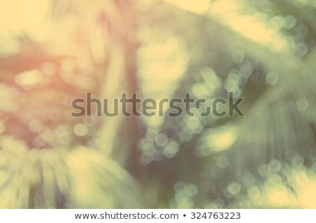 Stock photo: beautiful palm leaf texture in sunset