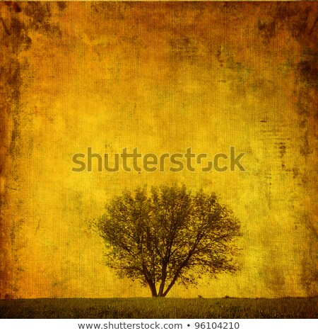 tree on grunge paper stock photo © fotoyou