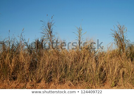 fence and high dry grass stock photo © ultrapro