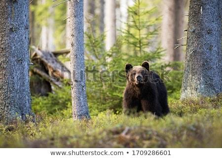floresta · tenha · ilustração · abstrato · cachoeira - foto stock © penivajz