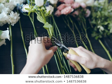 Close-up of unrecognizable female florist using hand pruners Stock photo © pressmaster