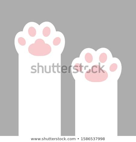 scraping cute kitten Stock photo © prill