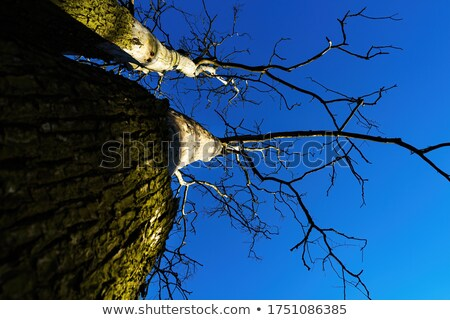 Partial view of a tree trunk bark Stock photo © 3523studio
