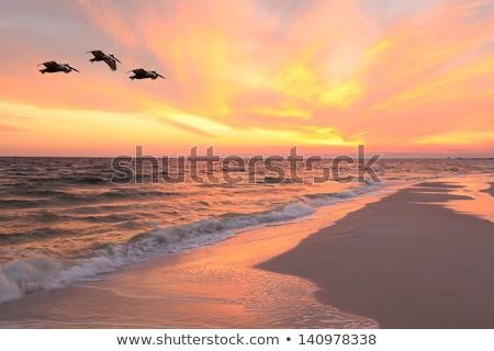 飛行 日没 シルエット オレンジ 空 雲 ストックフォト © dbvirago