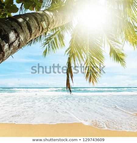 tropisch · strand · ochtend · vierkante · hemel · zee · palm - stockfoto © moses