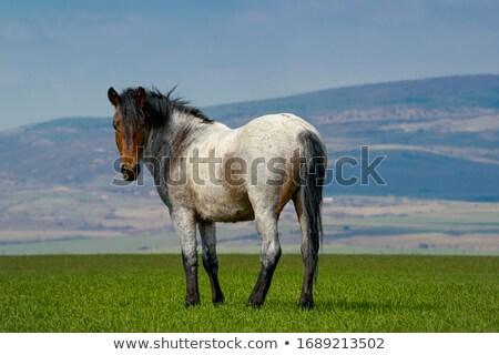 Gri at çiftçiler doğa Stok fotoğraf © rhamm