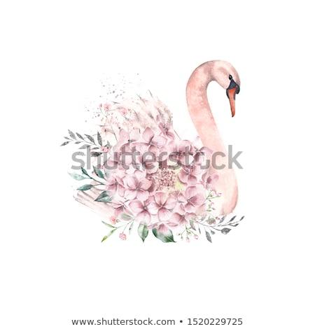 白鳥 水 美しい 湖 鳥 ストックフォト © sognolucido