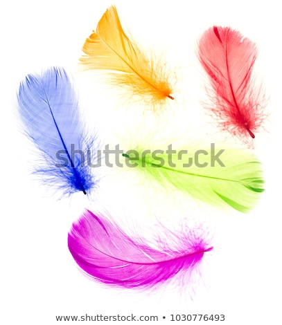 Bright multi-colored feathers background Stock photo © vlad_star