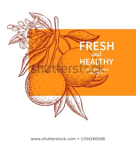 Kártya sablon grapefruit keret illusztráció természet Stock fotó © bluering