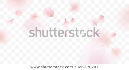 Vektor repülés szirmok rózsaszín elmosódott átlátszó Stock fotó © kostins