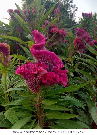 flor · belo · flor · amarela · lã · jardim · de · flores · jardim - foto stock © luissantos84