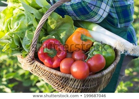 シニア 女性 バスケット レタス 表示 緑 ストックフォト © boggy