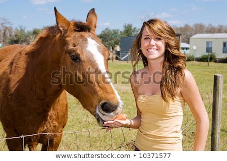 Mooie tienermeisje boerderij paard liefde gras Stockfoto © Lopolo