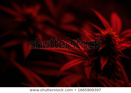 Stock photo: Cannabis fire leaf